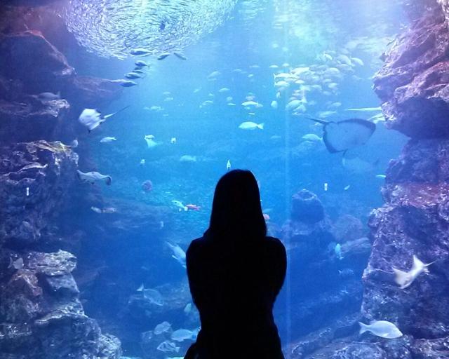 水族館image