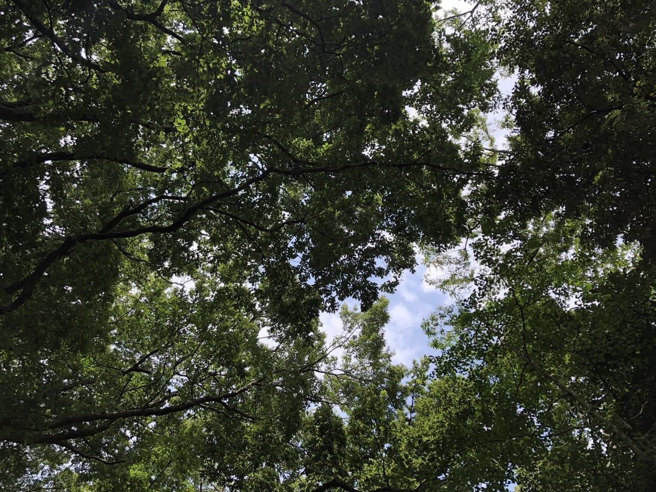 生田緑地風景